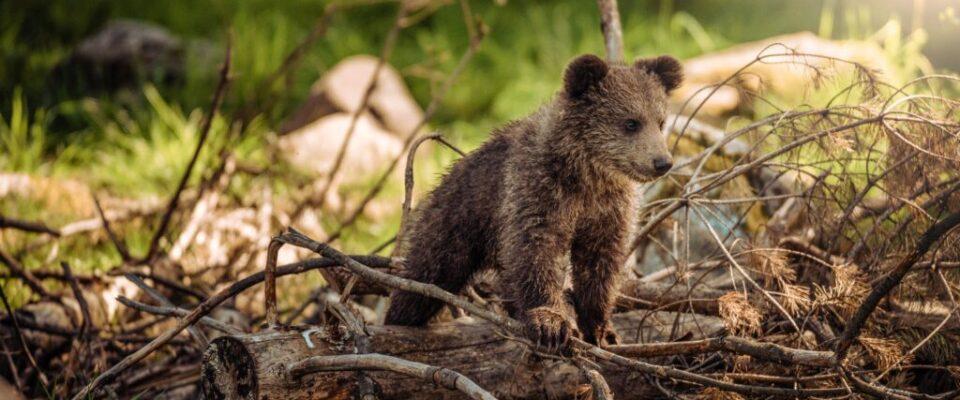 animal-baby-bear-1083502